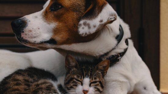 Afinal, qual é a melhor ração para cães e gatos?